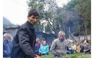 恩施市茶叶专家助力25万亩茶园安全过冬